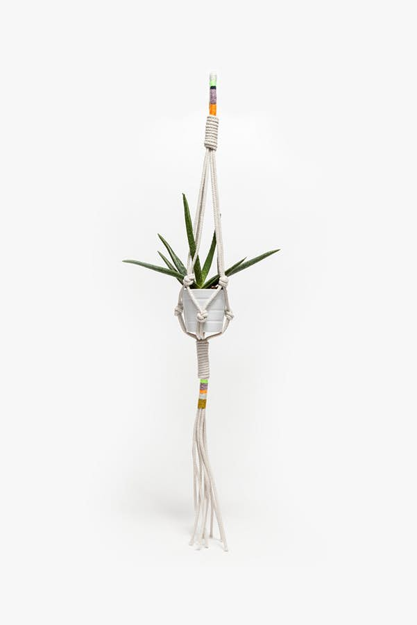 Hawaii Plant Hanger by Cold Picnic